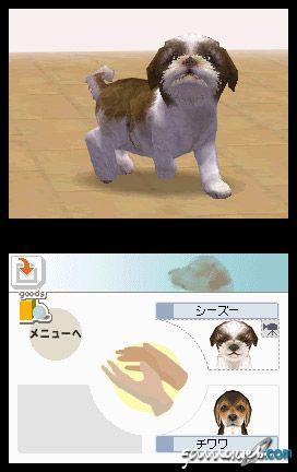 Nintendogs (DS)  Archiv - Screenshots - Bild 18