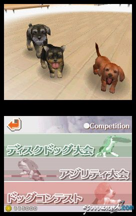 Nintendogs (DS)  Archiv - Screenshots - Bild 22