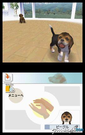Nintendogs (DS)  Archiv - Screenshots - Bild 17