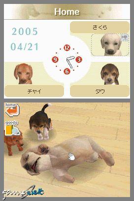 Nintendogs (DS)  Archiv - Screenshots - Bild 12