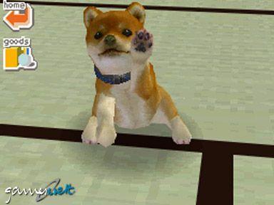 Nintendogs (DS)  Archiv - Screenshots - Bild 7