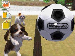 Nintendogs (DS)  Archiv - Screenshots - Bild 4