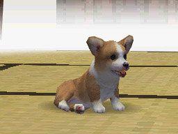 Nintendogs (DS)  Archiv - Screenshots - Bild 3
