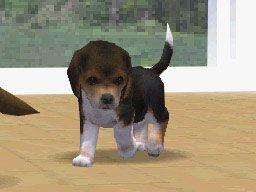 Nintendogs (DS)  Archiv - Screenshots - Bild 2