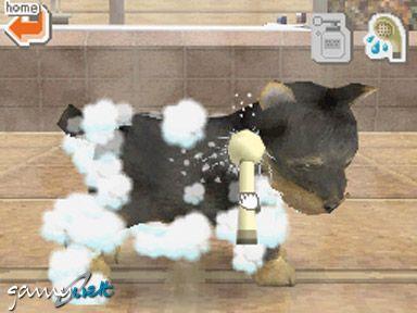 Nintendogs (DS)  Archiv - Screenshots - Bild 9