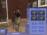 Die Sims 2: Haustiere  Archiv - Screenshots - Bild 15