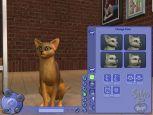 Die Sims 2: Haustiere  Archiv - Screenshots - Bild 14