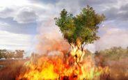 Far Cry 2  Archiv - Screenshots - Bild 11