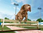 Petz Sports: Wilder Hunde-Spaß - Screenshots - Bild 10