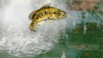 Rapala Pro Bass Fishing - Screenshots - Bild 2