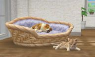 Nintendogs + Cats - Screenshots - Bild 3