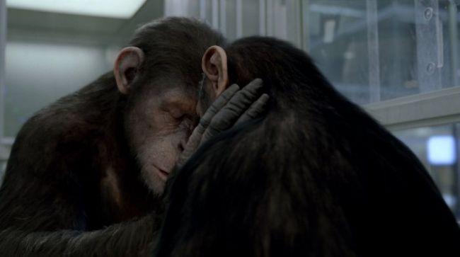 Planet der Affen: Prevolution - Screenshots - Bild 5