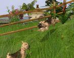 Wildlife Park: Meine Haustiere - Screenshots - Bild 5