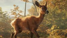 theHunter: Call of the Wild - Video