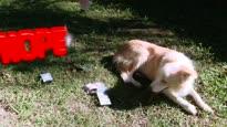 Jetpack Joyride - Flash The Dog Content Update Trailer