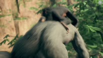 Mich laust der Affe! - Event-Bericht zu Ancestors: The Humankind Odyssey